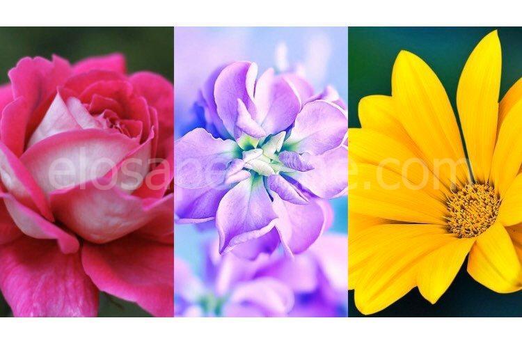 Scegli il fiore che ti piace di più e scopri cosa rende la tua personalità unica!