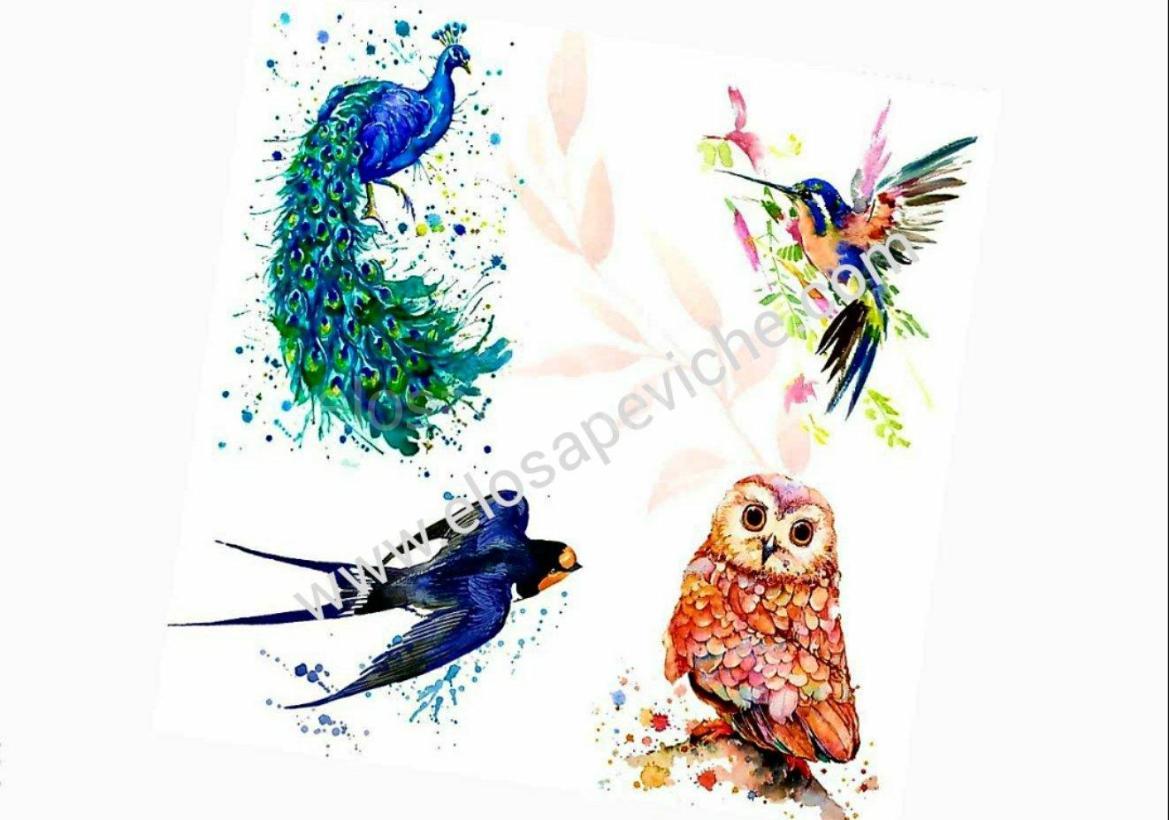Test: scegli un uccello e scopri cosa manca nella tua vita