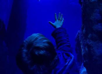 Instagram - noviembre 2017 - Drama en el acuario