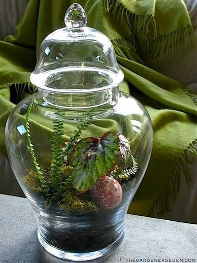 13 Beautiful Plants In Jars Garden You're Going To Fall In Love 17