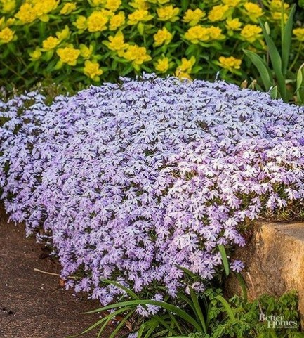 15 Amazing And Beautiful Emerald Blue Creeping Phlox Ideas 24