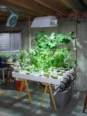 18 Finest Hydroponic Garden Ideas To Decorate Your House 09