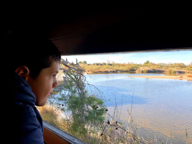 Excursion a la Albufera con niños, Oriol observando aves