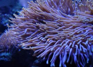 Aquarium de Skansen