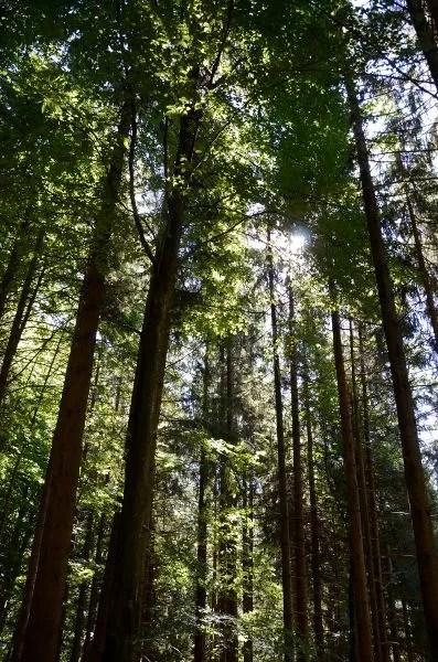 Bosques de la Selva Negra