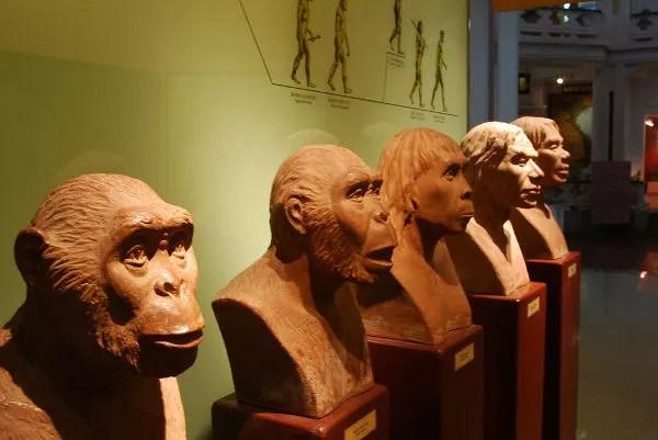 Bustos-de-homínidos-en-el-Museo-de-Historia-de-Hanoi ▷ Cosas que ver en Hanoi, imprescindibles para visitar la capital vietnamita.