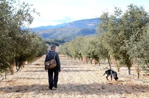 Cómo buscar trufa negra en Castellón
