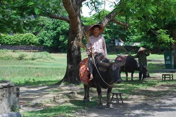 Campesinos vietnamitas en Hoa Lu