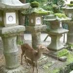 Ciervos y linternas de piedra en el Kasuga-taisha de Nara