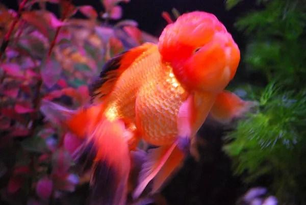 Extraño pez del Ocean Park Hong Kong