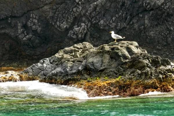 Fotos Mar Menor, aves acuaticas