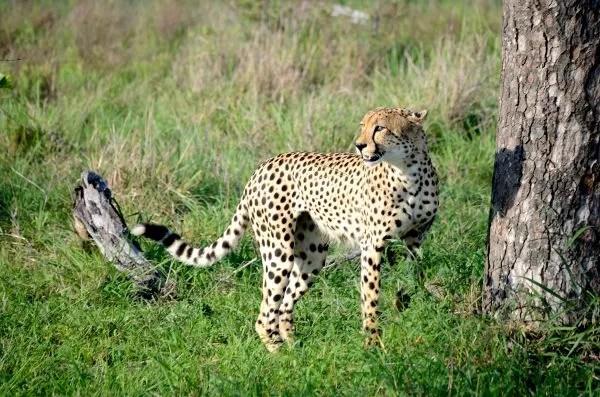 Fotos Parque Kruger Sudáfrica, mirando