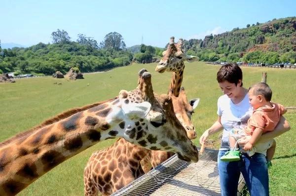 Fotos Parque de Cabárceno en Cantabria, Vero, Oriol y las jirafas