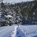 Fotos de Andorra, raquetas en Grau Roig
