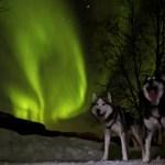 Fotos de Auroras Boreales en Noruega, huskys en Alta