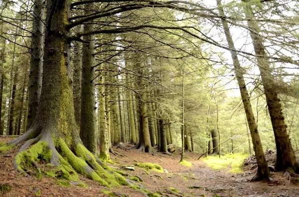 Fotos de Bergen, Monte Floyen bosque