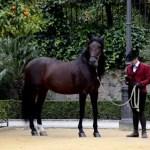 Fotos de Córdoba, caballo y jinete