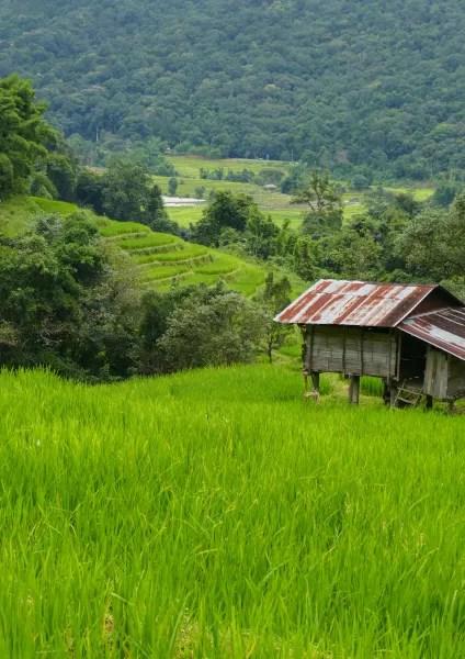 Fotos de Doi Inthanon en Tailandia, arrozales