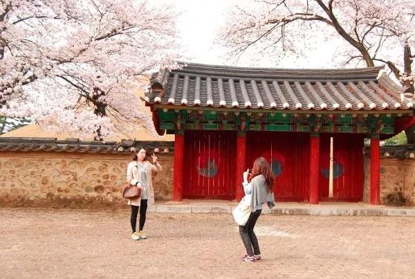 Fotos de Gyeongju, cerezos en flor en el parque de los túmulos