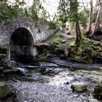 Fotos de Irlanda del Norte, Parque Forestal de Tollymore