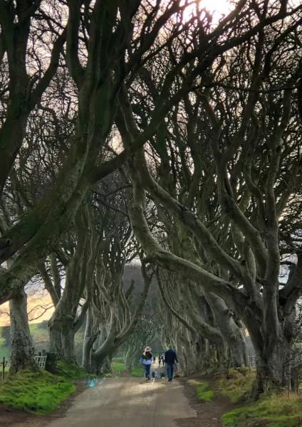 Fotos de Irlanda del Norte, The Dark Hedges vertical