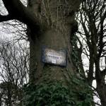Fotos de Irlanda del Norte, camino castillo de Audley