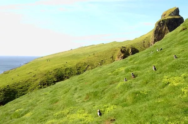 Fotos de Islas Feroe. Mykines, frailecillos