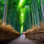 Fotos de Kioto en Japon, bosque de bambu Arashiyama