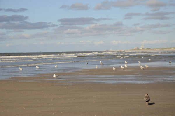 Fotos de La Haya, gaviotas playas de Kijkduin
