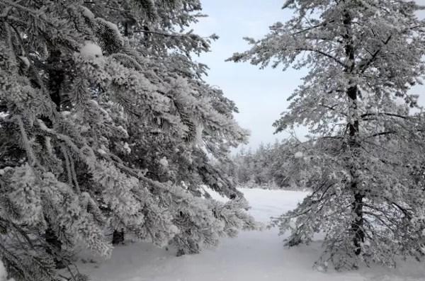 Fotos de Laponia Finlandesa, bosques helados