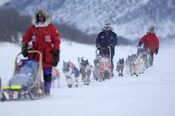 Fotos de Laponia Noruega, trineos de perros en Alta