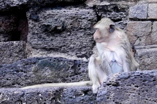 Fotos de Lopburi en Tailandia, templo de los monos