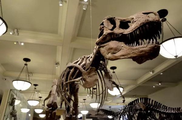 Fotos de Nueva York, Museo Americano de Historia Natural