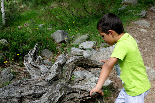 Fotos de Pirineo de Lleida, Oriol y tronco en Aiguestortes