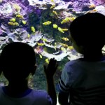 Fotos de San Sebastián, Teo y Oriol en el Aquarium