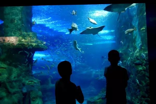 Fotos de San Sebastián, Teo y Oriol mirando en el Aquarium