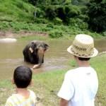 Fotos de Tailandia, Teo y Oriol en Elephant Nature Parc