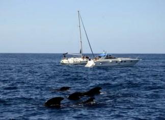 Fotos de Tenerife, ballenas junto a los barcos