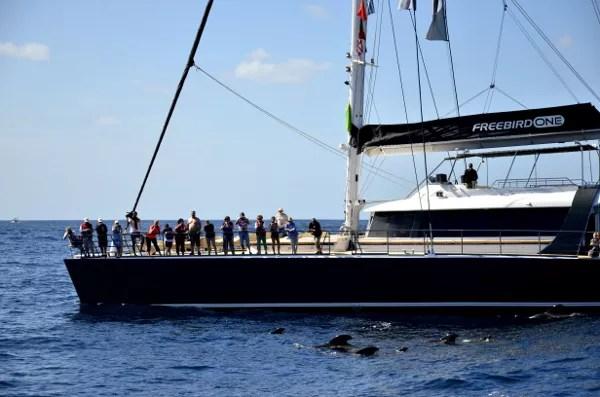Fotos de Tenerife, viendo las ballenas desde el barco