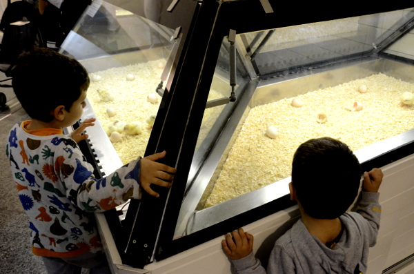 Fotos de Valencia, Teo y Oriol en el Museo de las Ciencias Príncipe Felipe