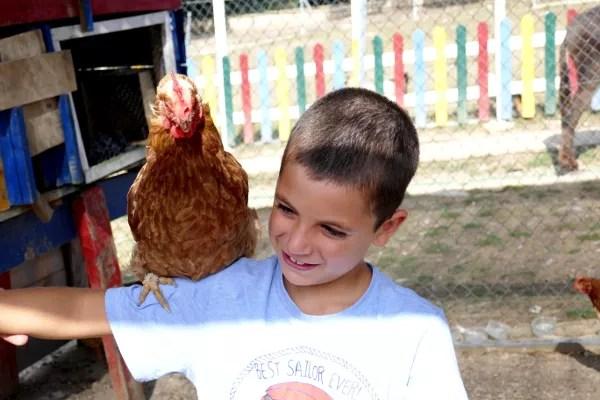 Fotos de Vitoria en Euskadi, Teo gallina granja