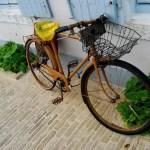 Fotos de la Isla de Re, Saint-Martin de Ré bicicleta