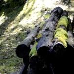 Fotos del Goierri en Euskadi, troncos de la serreria de Zerain