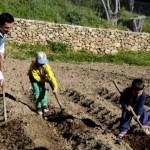 Fotos del Valle del Jerte, Agroturismo El Vallejo Teo, Oriol y Enrique labrando