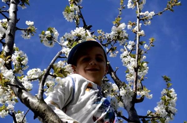 Fotos del Valle del Jerte, Agroturismo El Vallejo Teo en los cerezos