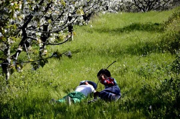 Fotos del Valle del Jerte, Agroturismo El Vallejo Teo y Oriol en la hierba