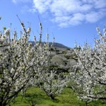 Fotos del Valle del Jerte en Caceres. Floración de los cerezos