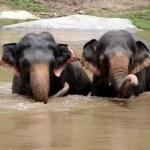 Fotos del viaje a Tailandia con niños, elefantes