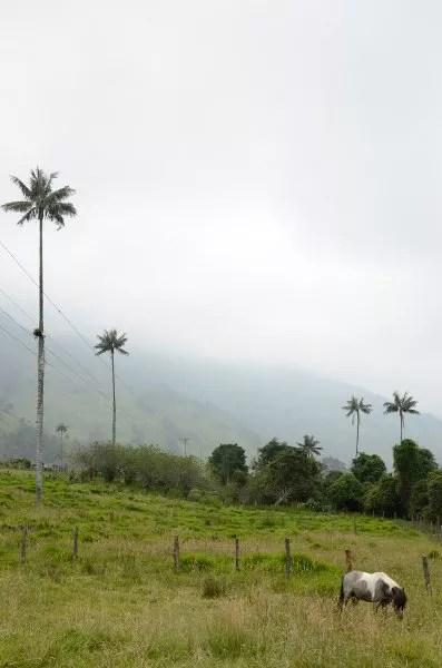 Paisaje del Eje Cultural Cafetero en el Valle de Cocora