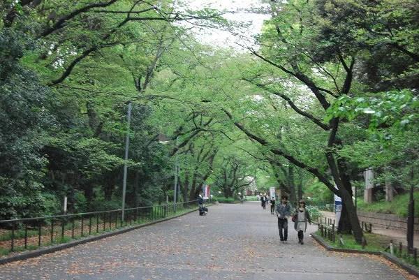 Paseando por el parque Ueno de Tokio